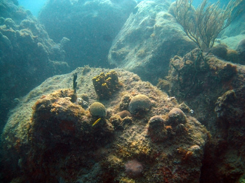 A side view of the large volcanic boulders colonized by small corals