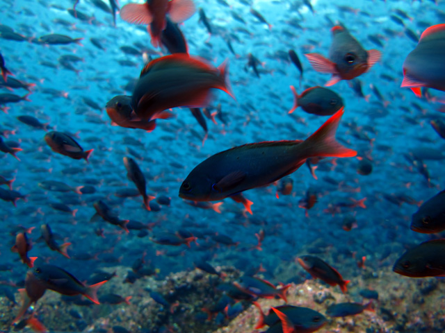 Thick schools of fish
