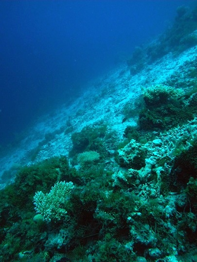patch reef slope