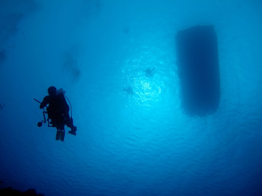 Divers descend to the reef to begin their surveys.
