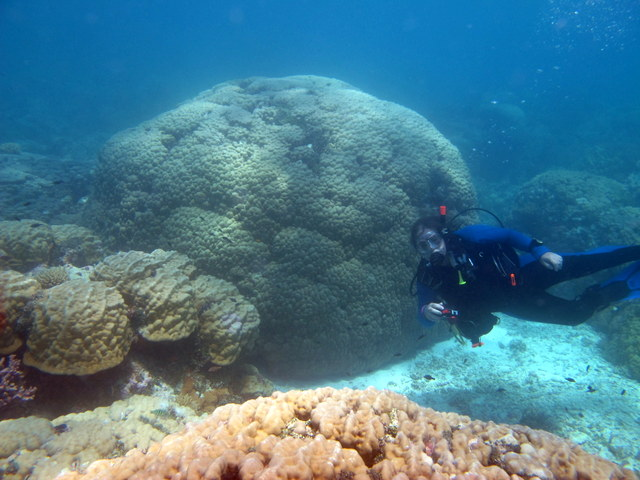Jim swims in front of a large Porites coral colony
