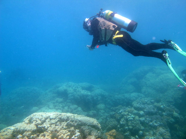 Dr. Pete Mumby observing the same reef on this mission