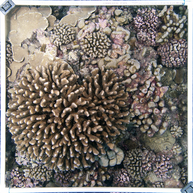 A coral filled quadrat.