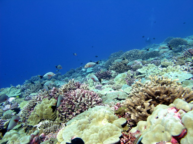 Healthy reef with high coral cover off the coast of Rangiroa