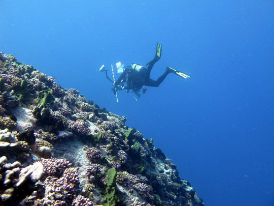 The reef on the outside of the atoll can quickly slope down to well over 40 meters depth